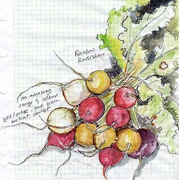 Braised rainbow radishes